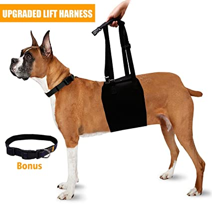 71qJPShl IL._SX425_ amazon com dog lift support harness back sling helps