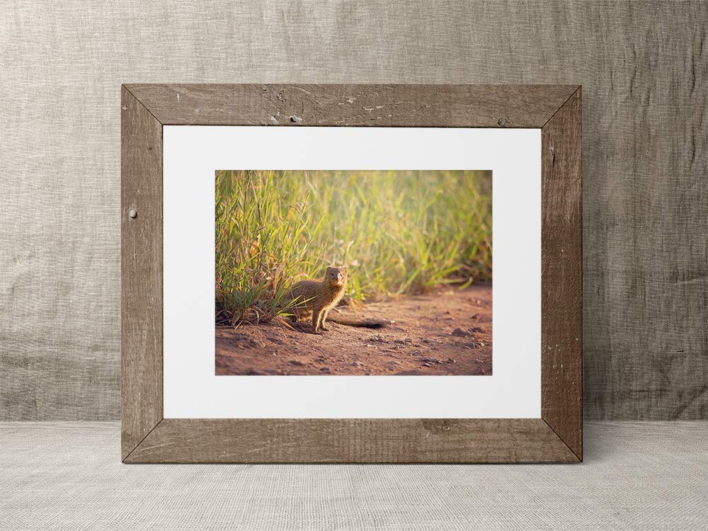 Mongoose - Wildlife Photograph Animal Picture Home Decor Wall Nature Print - Variety of Size Available by Whimsical Wild Artwork (Image #6)