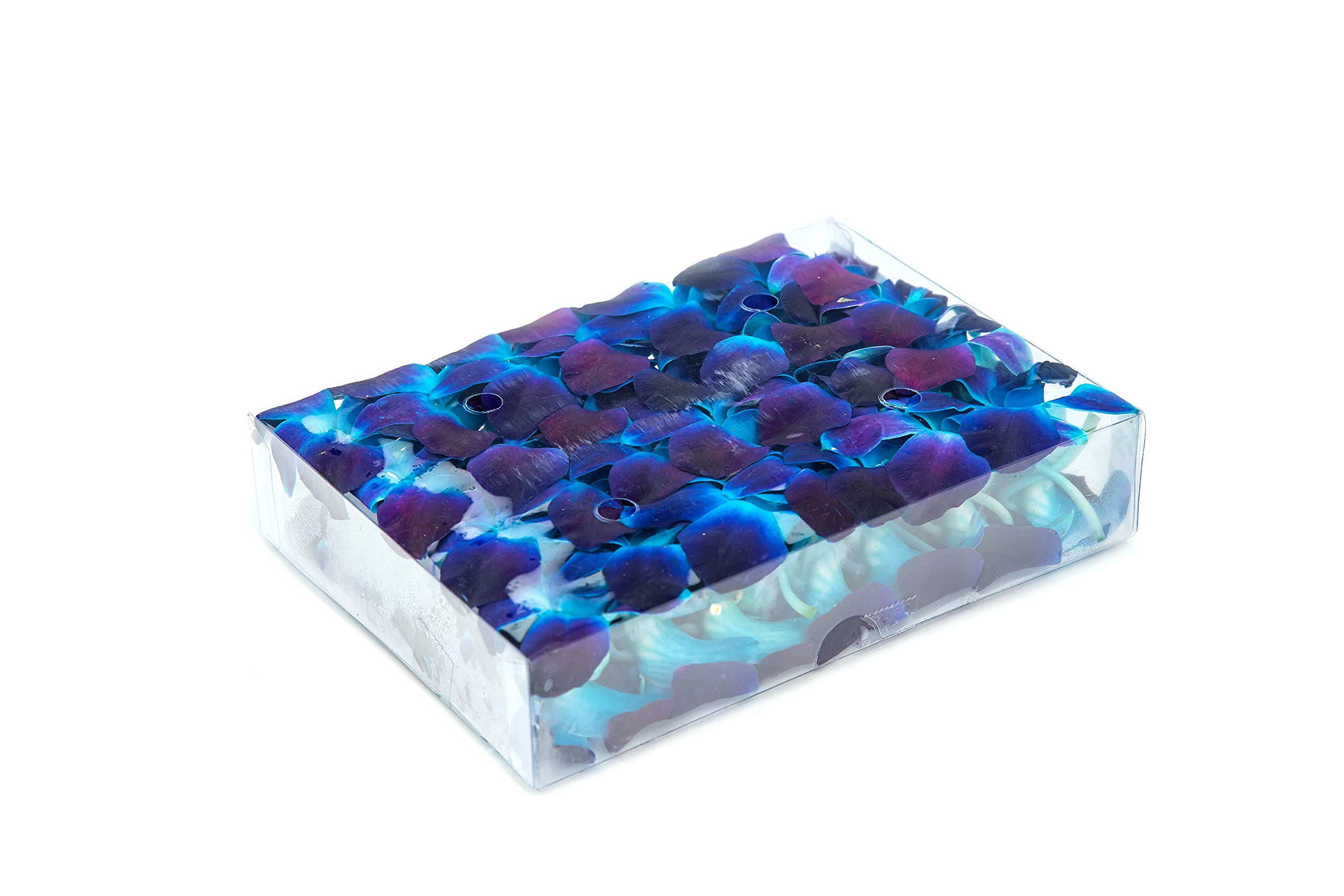 Fresh Dendrobium Orchid Heads Blooms (50 Pieces/Box) - Blue Tinted Sonnia by Collection by Tiffany (Image #1)