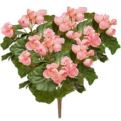 Pink Begonia Bush by OakRidgeTM, Set of 3: Home & Kitchen