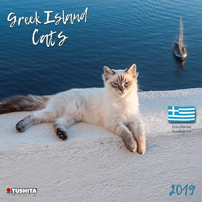 Calendario 2019 gatos y gatitos de las Islas Griegas – tigre – Islas griegas – Roux y blanco – Grece (TS) + incluye un – Agenda de bolsillo 2019: Amazon.es: Oficina y papelería