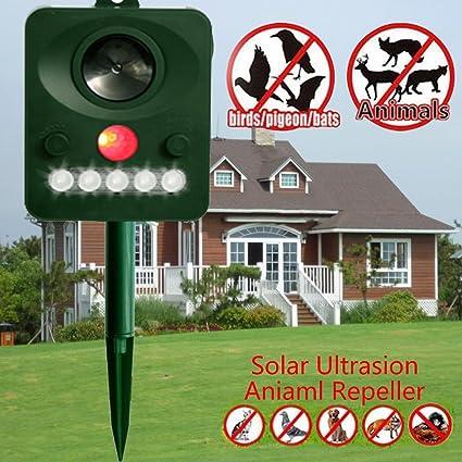 Amazon.com: Zehui – Solar Animal dispeller con Sharp Flash ...