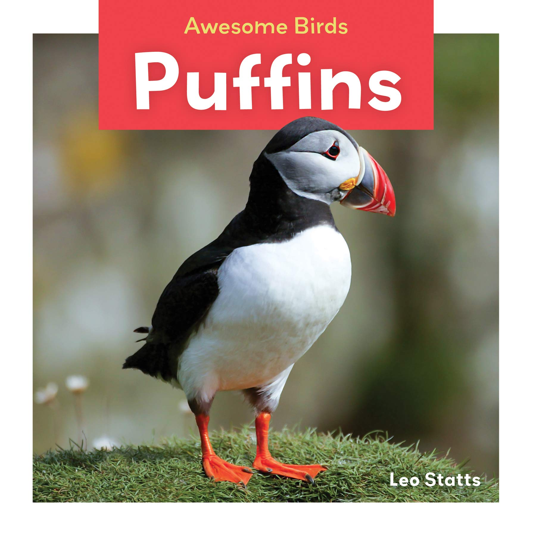 Puffins  Awesome Birds