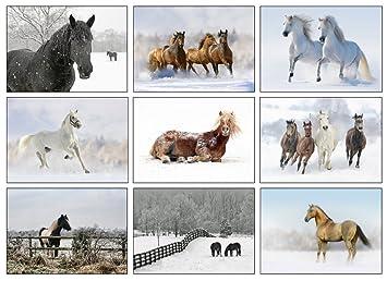 Nine equestrian christmas greeting cards amazon office products nine equestrian christmas greeting cards m4hsunfo