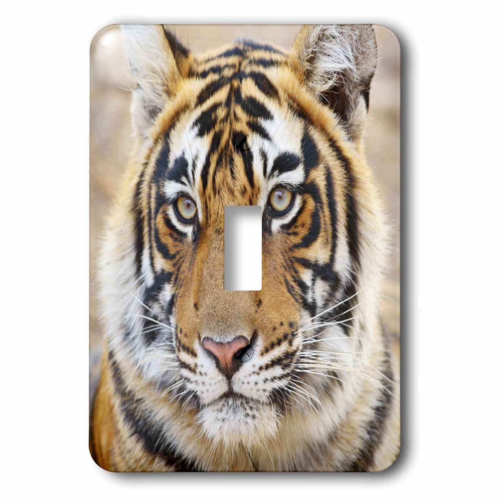 3dRose lsp_75677_1 Royal Bengal Tiger, Ranthambhor National Park, India-As10 Jra0271 Jagdeep Rajput Light Switch Cover