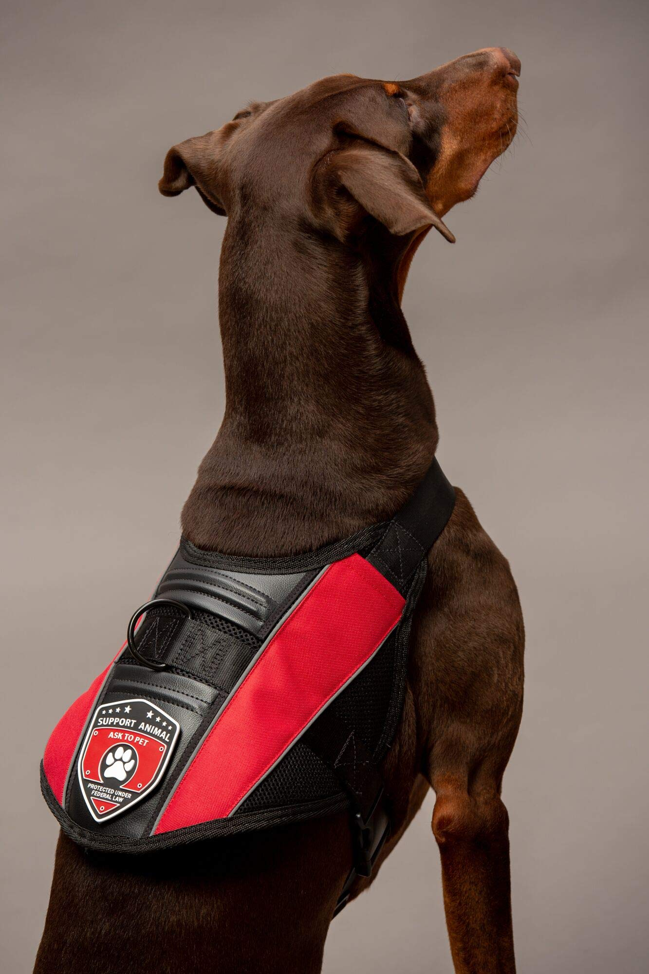 "S.A. Shop Emotional Support Dog Vest (XXS 11-14""=4-8 LBS)"