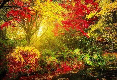 MMPTn 7x5ft Otoño para Colorear Follaje Jardín Botánico Fotografía Telón de Fondo Hojas de otoño soñadoras Fondo de Paisaje Americal Seattle Washingtons Arboretum Back Drop Photo Studio Props: Amazon.es: Electrónica