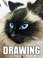 Time Lapse Drawing of a Ragdoll Cat