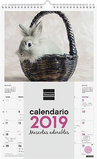 Finocam 780553519 - Calendario de pared 2019: Amazon.es: Oficina y ...