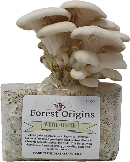 Amazon.com : White Oyster Mushroom Grow Kit by Forest Origins, Beginner Mushroom  Growing Kit, Top Gardening Gift, Unique Gift, Holiday Gift : Garden &  Outdoor