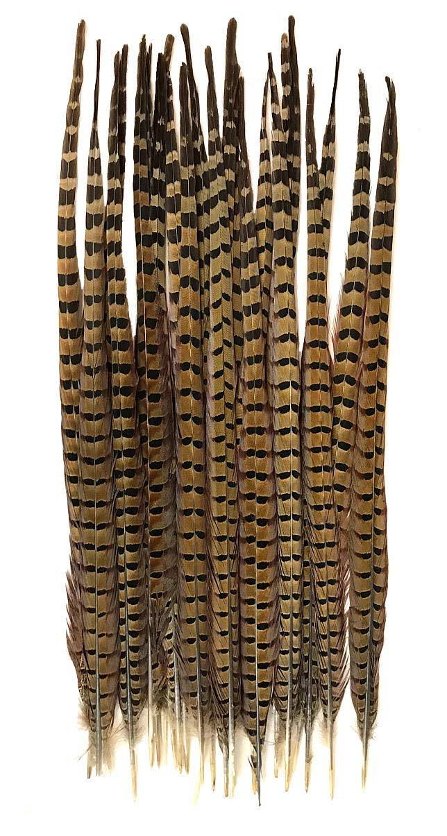 Ringneck Pheasant Tail Feathers 22-24'' (100)