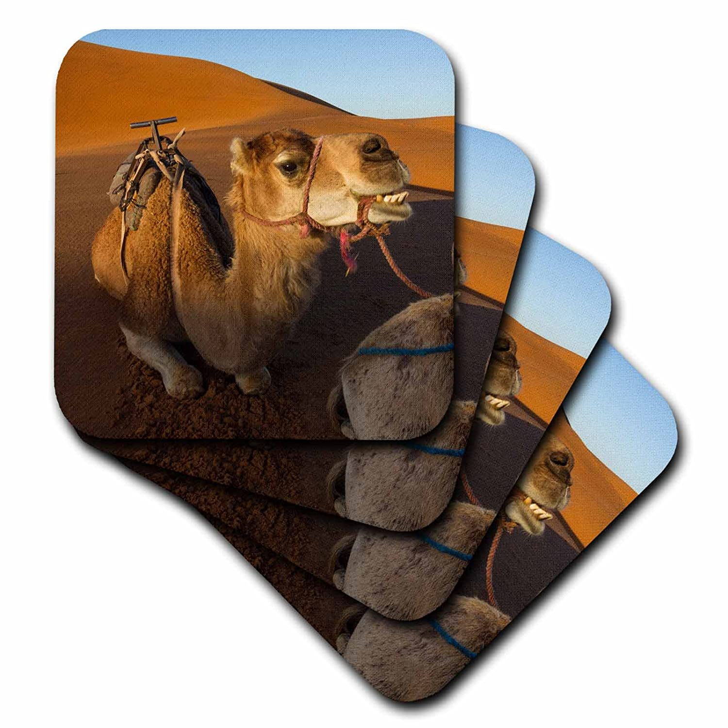 - set of 4 Coasters Camels Sahara Soft cst/_276479/_1 3dRose Danita Delimont A camel appears to be smiling on the dunes Morocco