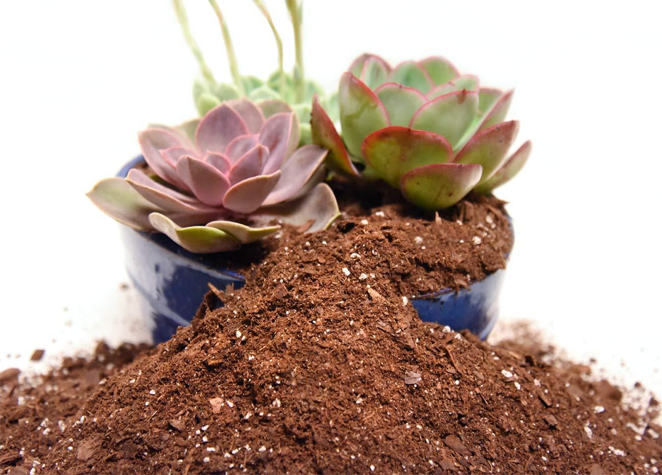 Amazon.com : Succulent Soil Mix by Perfect Plants 4quarts- Plant All ...