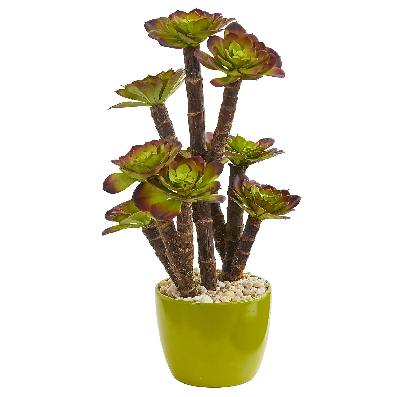 グリーンセラミックポット入り、自然なエケベリア多肉植物 B078TZK4ZW