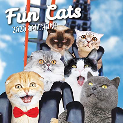 Fun Cats Calendario de pared de gatos 2020 (2020): Amazon.es: Oficina y papelería