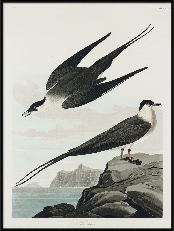 Arctic Yager Print, Antique Bird Painting, Vintage Drawing Poster Wall Art Decor, Bird Wall Decor, Bird Watercolor | C342 8.5x11