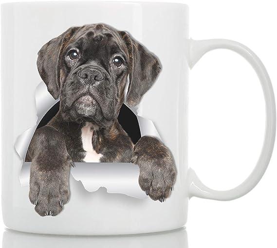 Moto Lola   Perros boxer, Perros, Mascotas bonitas