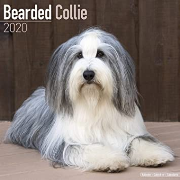 Bearded Collie Vinyl Decal Sticker HIGH QUALITY Color Choice