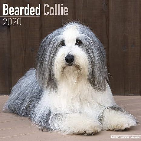 Uh Calendar 2020 Amazon.: Bearded Collie Calendar 2020   Dog Breed Calendar