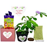 TickleMe Plant Mother's Day/Birthday Gift Box Set - To grow the Plant that closes its leaves when you Tickle it or blow it a Kiss! It even grows Pink Flowers!I'm Tickled You're My Mom!