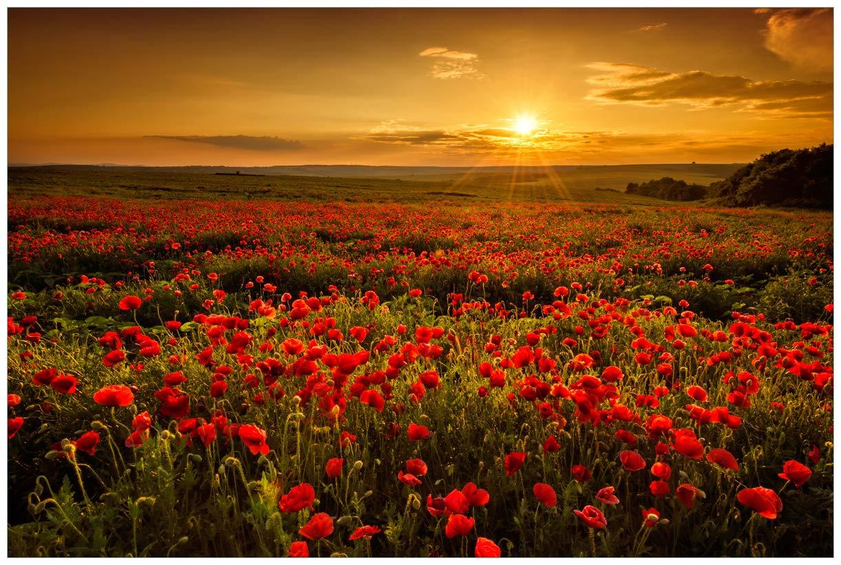 Wallario Premium XXL Vliestapete Mohnblumenwiese bei Sonnenuntergang am Abend - Größe  400 x 267 cm