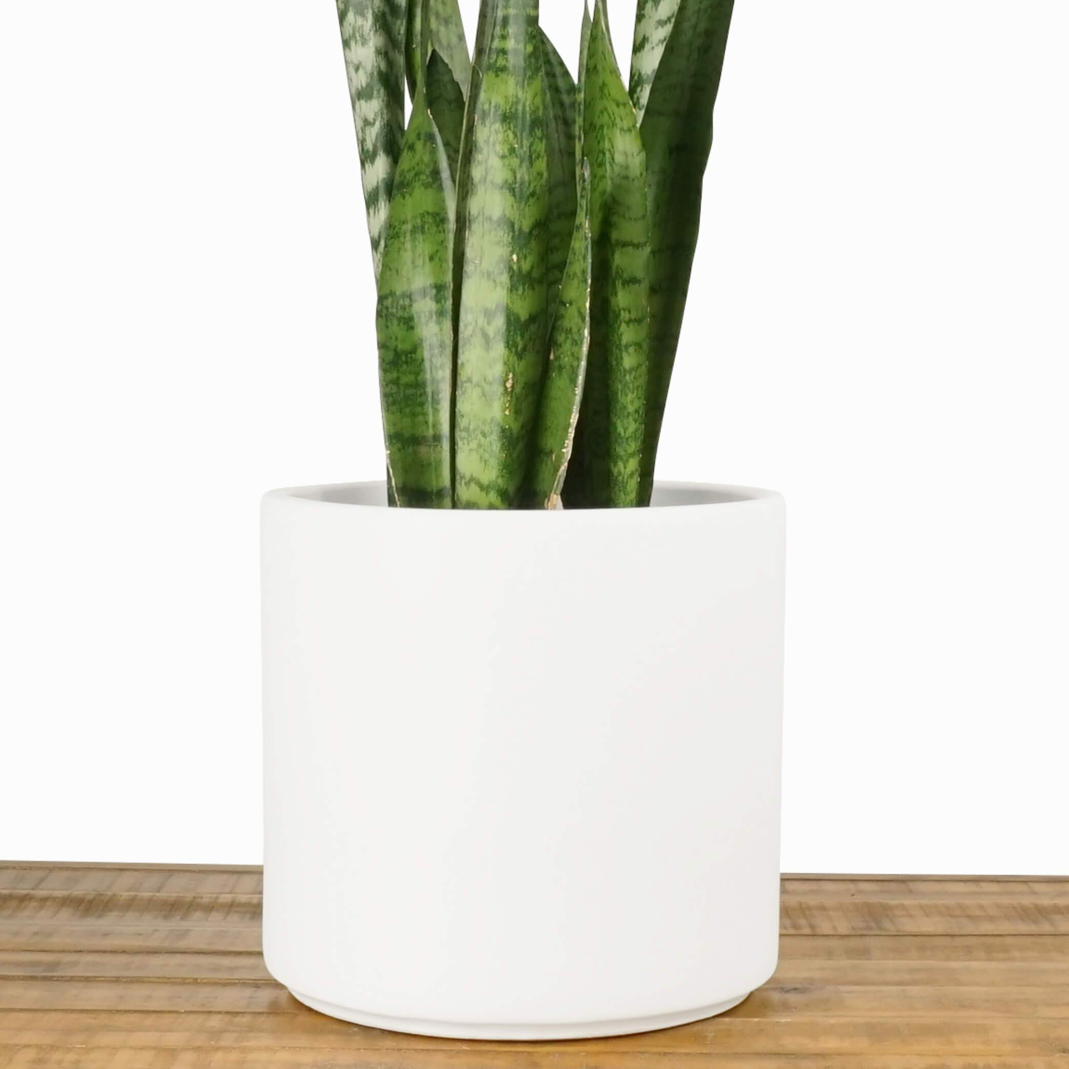 Indoor Flower Pot | Large Modern Planter, Terracotta Ceramic Plant Pot - Plant Container Great for Plant Stands (8.5 inch, White)