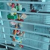 Juguete para loros 35 cm: Amazon.es: Productos para mascotas