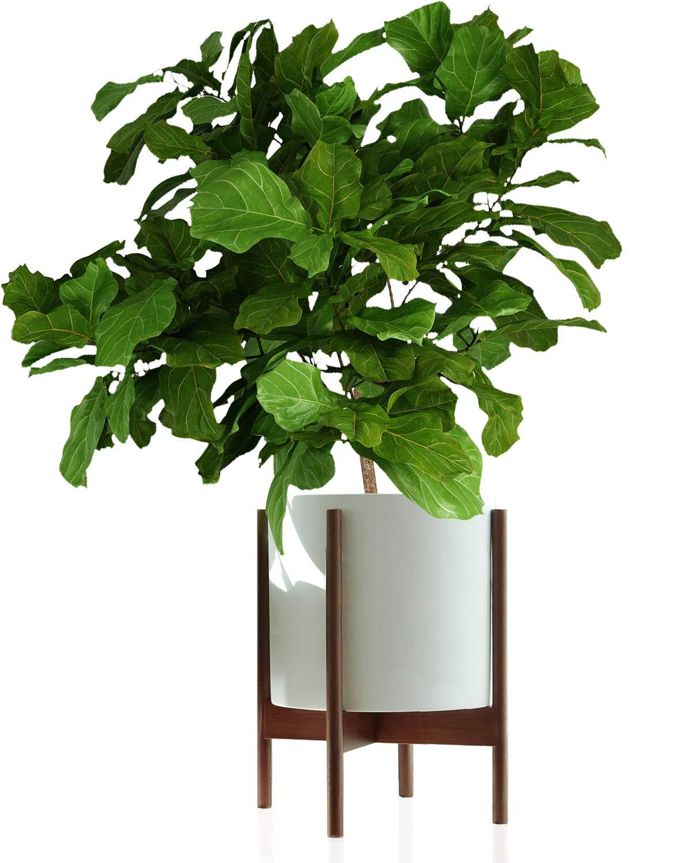 Fox & Fern Mid-Century Modern Plant Stand - Acacia - EXCLUDING 12'' White Ceramic Plant Pot