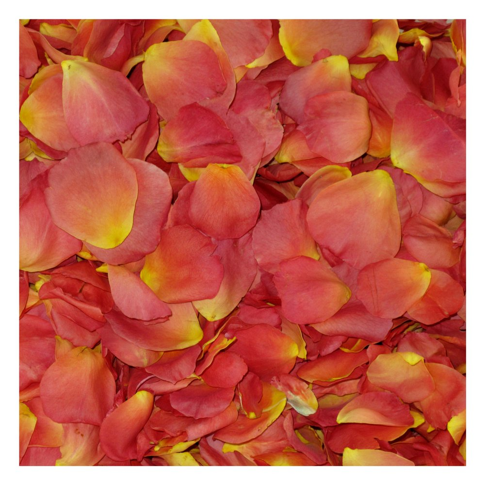 Living Easy Rose Petals- Real Rose Petals. Wedding Petals from Flyboy Naturals 240 cups