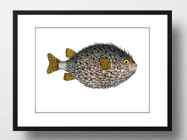 Din A4 Kunstdruck ungerahmt Fisch Retro Vintage Meer Ozean Maritim Zeichnung Badezimmer Druck Poster Bild Stachelfisch