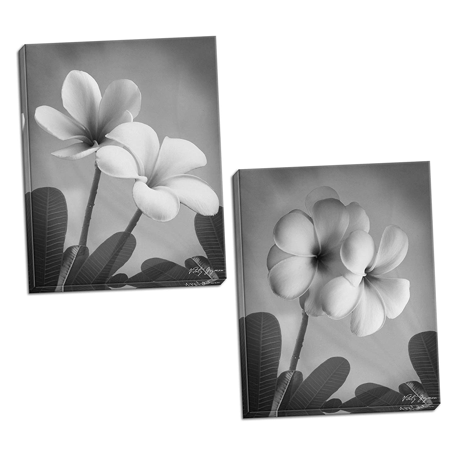 Amazon com gango editions 2 classic beautiful black and white blooming plumerias floral décor two 8x10in mounted prints ready to hang posters prints