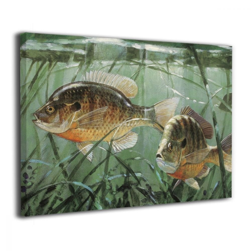 TRdY Page Animal Fish Painted Canvas Inner Framed Wall Decor Modern Artwork for Office Home Decor Pictures Ready to Hang for Living Room Bathroom