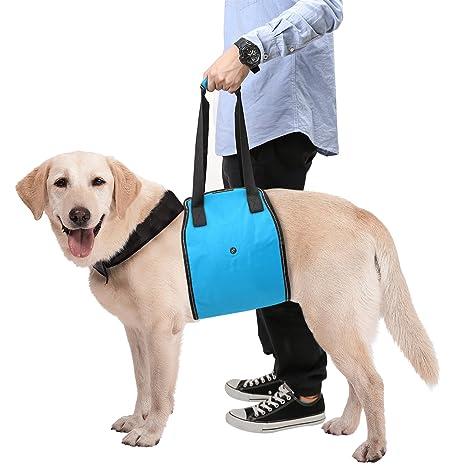 Pañales para perros discapacitados