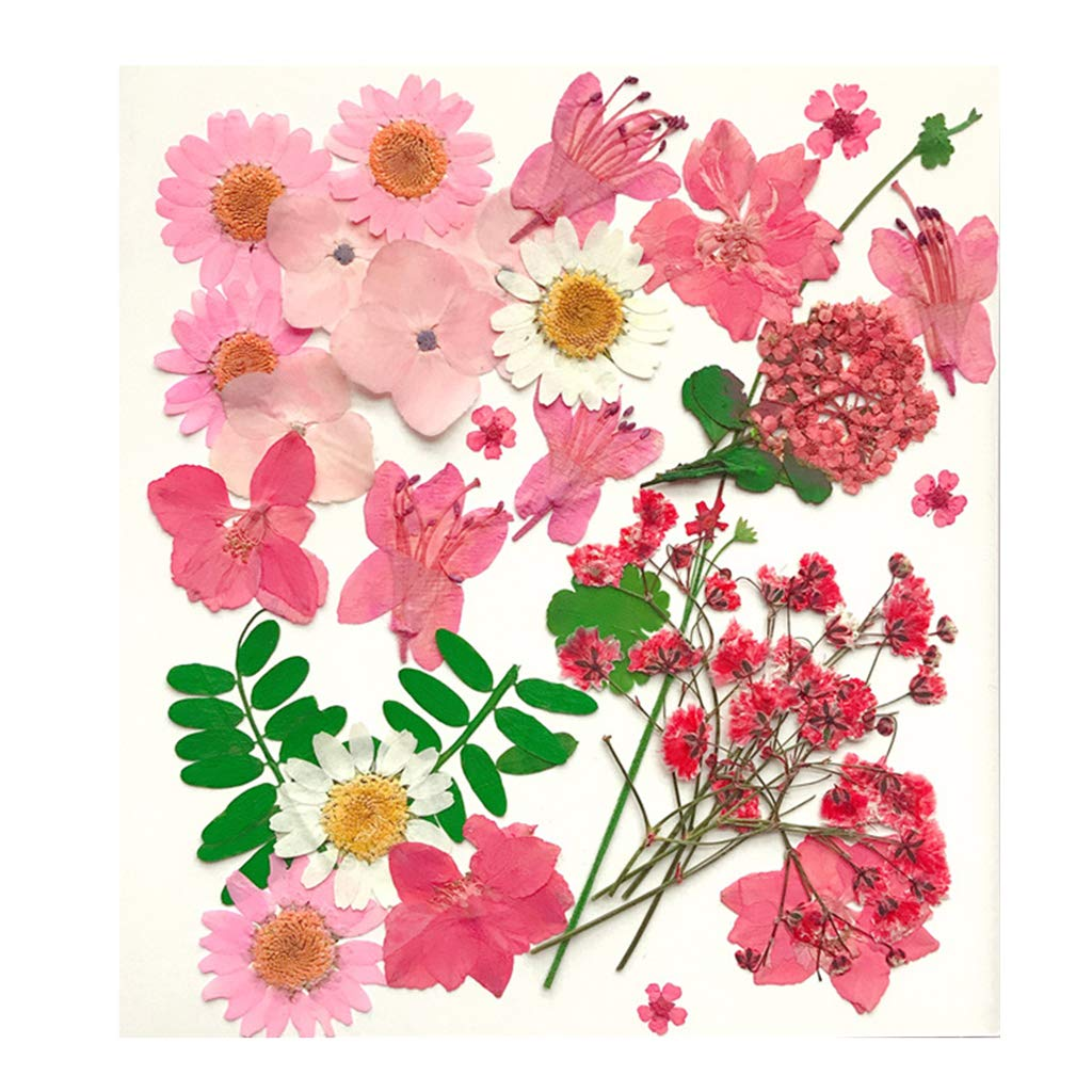 dailymall Gepressten Getrockneten Blumen Nat/ürliche Blumen Verzierungen DIY Machen Karte Handgemachten Schmuck Harz Handwerk A 30St