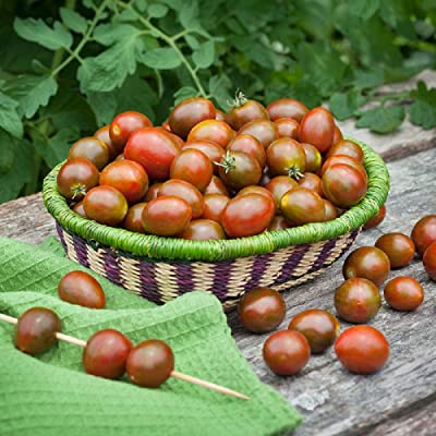 Chocolate Sprinkles Grape Tomato - 10 Seeds : Garden & Outdoor