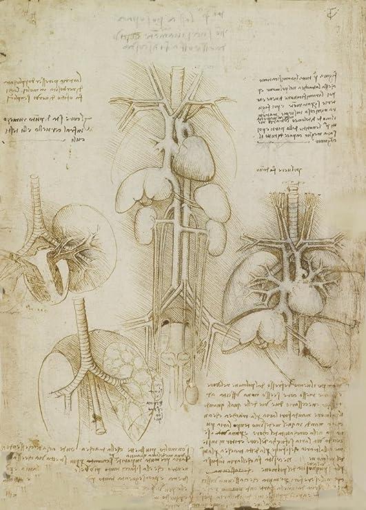 Anatomía LEONARDO da VINCI