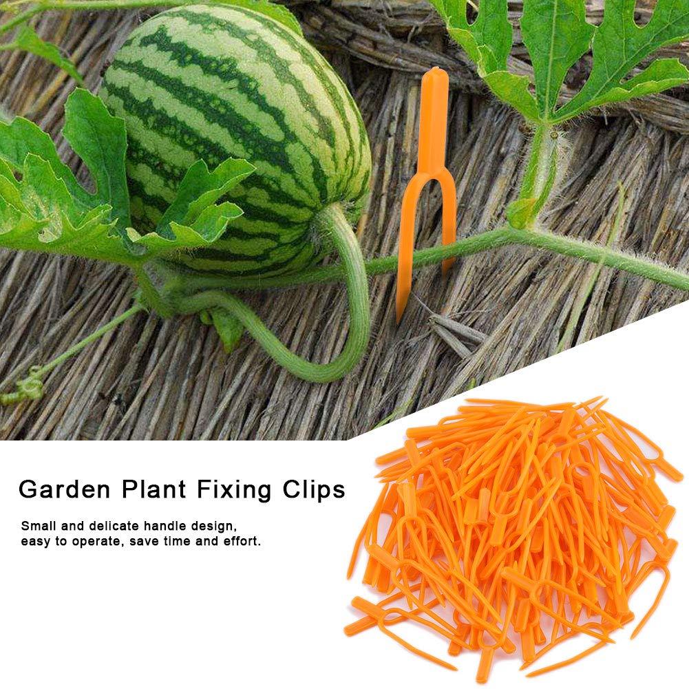 Hongzer Clip de jardín, 100 Unids Clips de Fijación de Plantas de ...