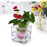 Petbob Flower Pot,Decorative Flower Pot,Self-Watering Mini Plant Pot+Fish Tank,Beautiful DIY Home Office Desk Decor Christmas Gift,Complimentary:Luminous Pebbles Stone(Transparent)
