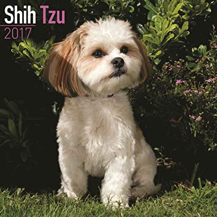 Shih Tzu Calendar 2017 Dog Breed Calendars 2016 2017 Wall