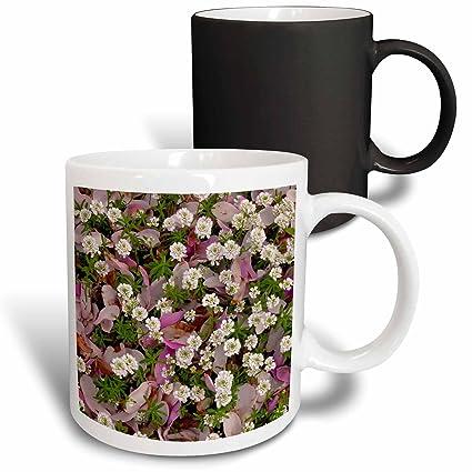 Amazon Com 3drose Danita Delimont Flowers Usa Oregon