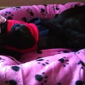 Amazon.com : HiSurprise Pet Dog Cat Puppy Kitten Soft