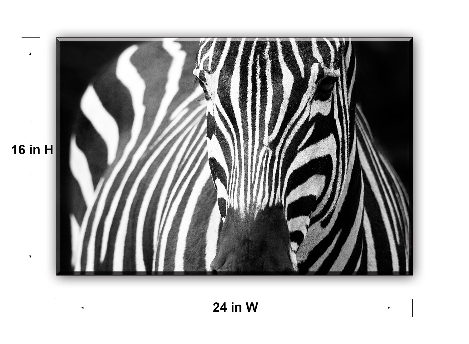 Zebra wall art decor for bedroom piy african animals picture canvas prints black and white painting decorations 1 thick frame waterproof artwork
