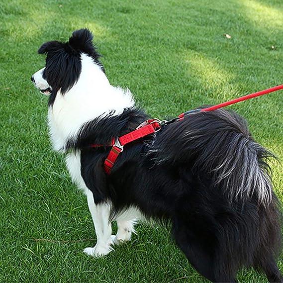 DOG Accesorios para mascotas Arnés suave para mascotas Correa para ...