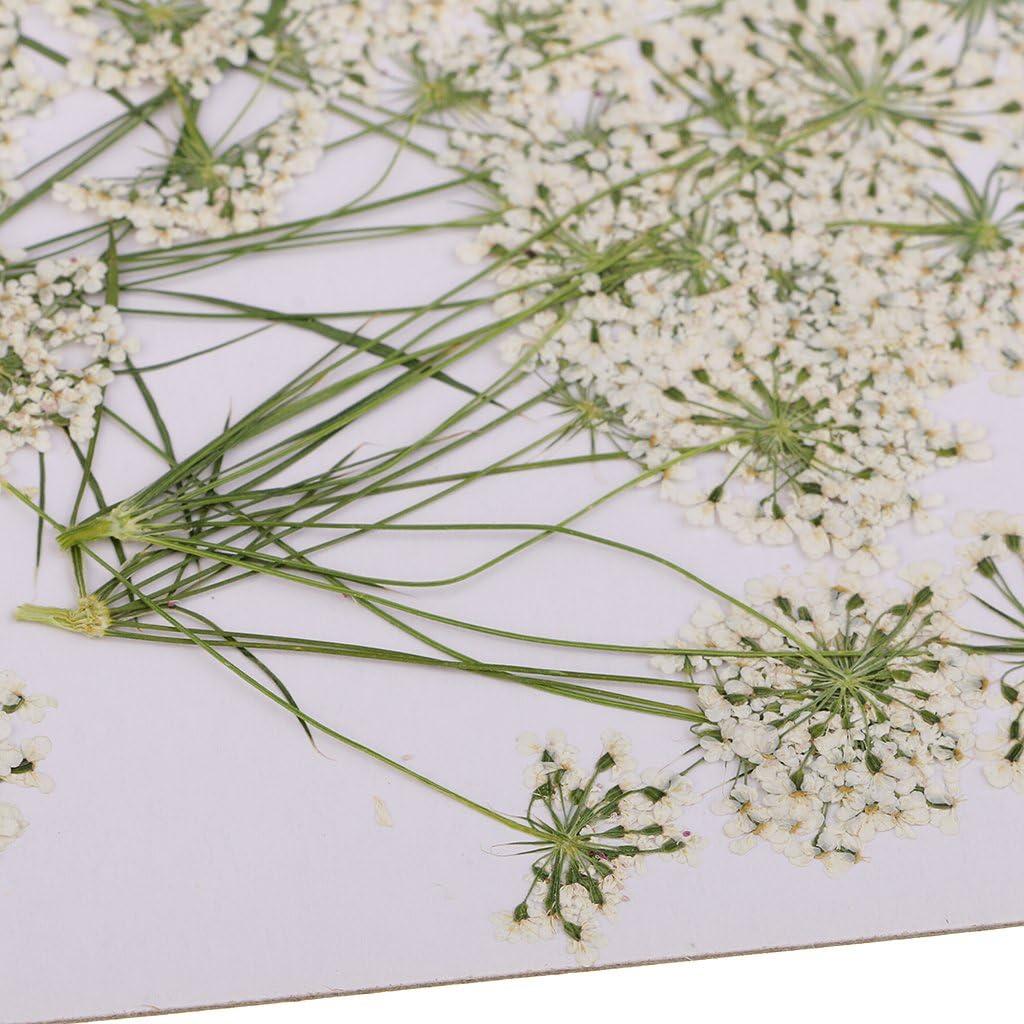 10pcs Wei/ß MagiDeal Trockene Blume Set K/ünstliche Bl/ätter Blumen Kunstblumen Tischdeko Bl/üten Verzierung