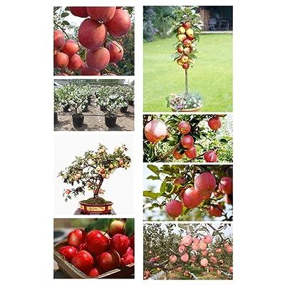 20 Bonsai Apple Tree Seeds Garden Yard Outdoor Living Fruit Plant Fascinating : Garden & Outdoor