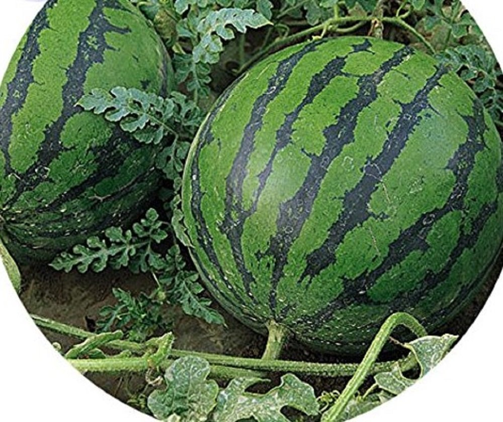 Seeds Market Rare Big Pink Watermelon Seeds improve the quality, professional packing, 20 seeds, thin skin soft sweet tasty melons by Seeds Market