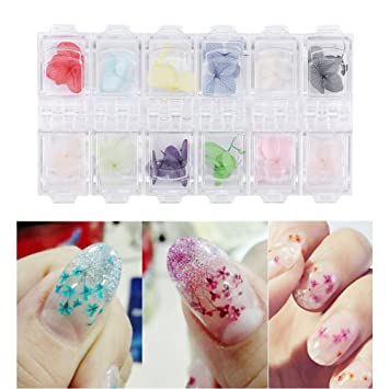 Amazon Nail Art Dried Flowers Real Petal Decoration 3d Diy