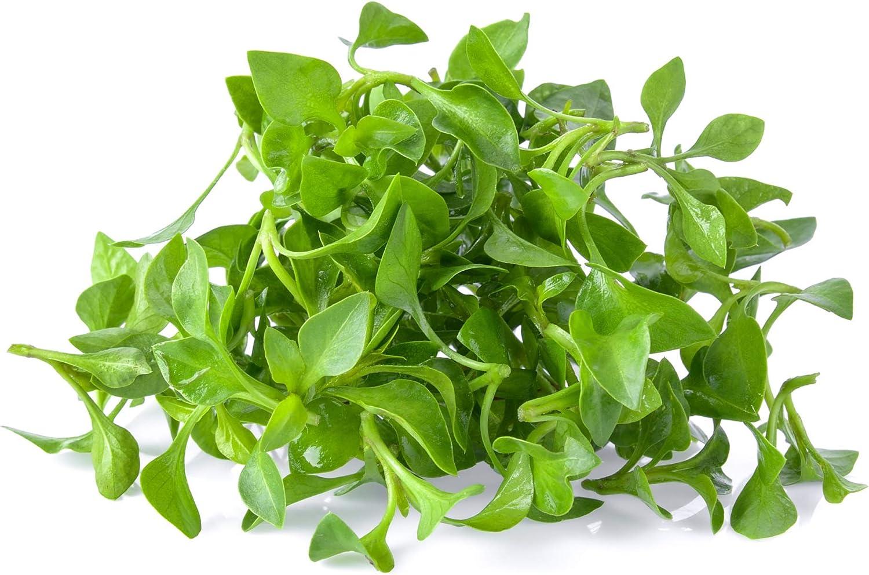 Watercress Garden Seeds - 1 Oz - Non-GMO, Heirloom, Vegetable Gardening Cress & Microgreens Seeds