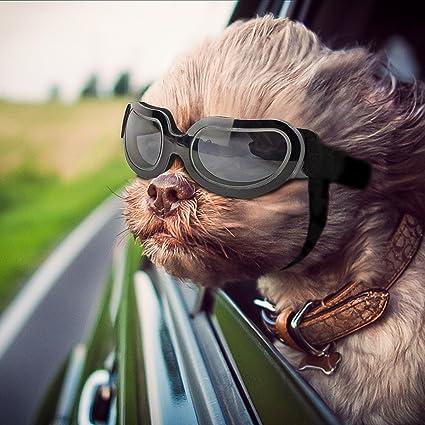 Namsan Stylish and Fun Pet/Dog Puppy