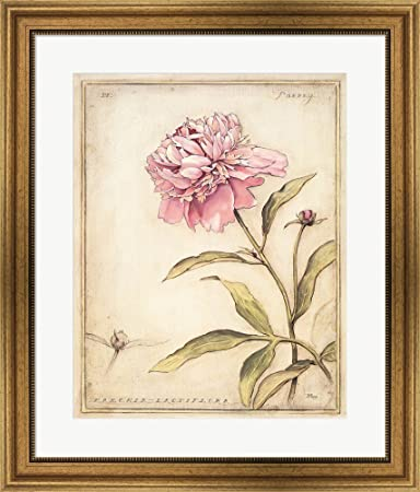 Amazon.com: Peony IV by Meg Page Framed Art Print Wall Picture, Wide ...